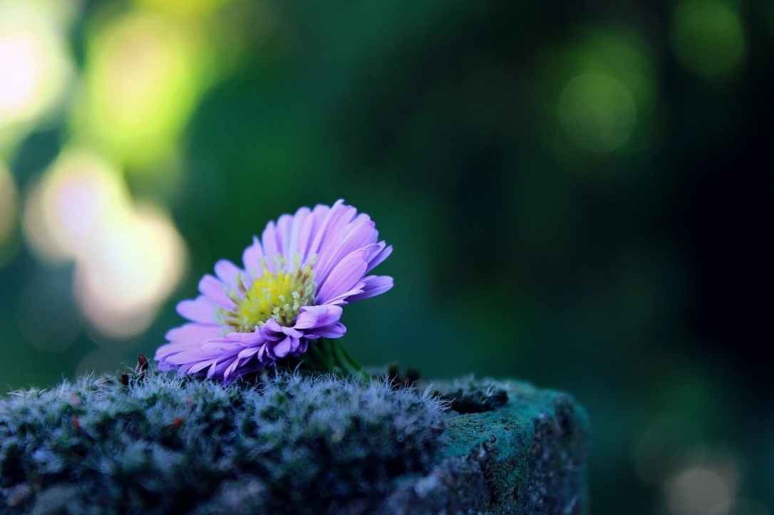 alone autumn beautiful bloom