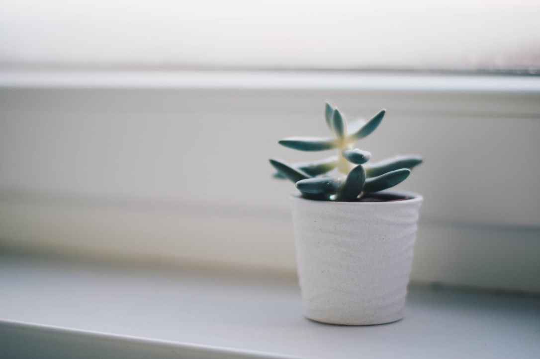 green succulent plant in white pot
