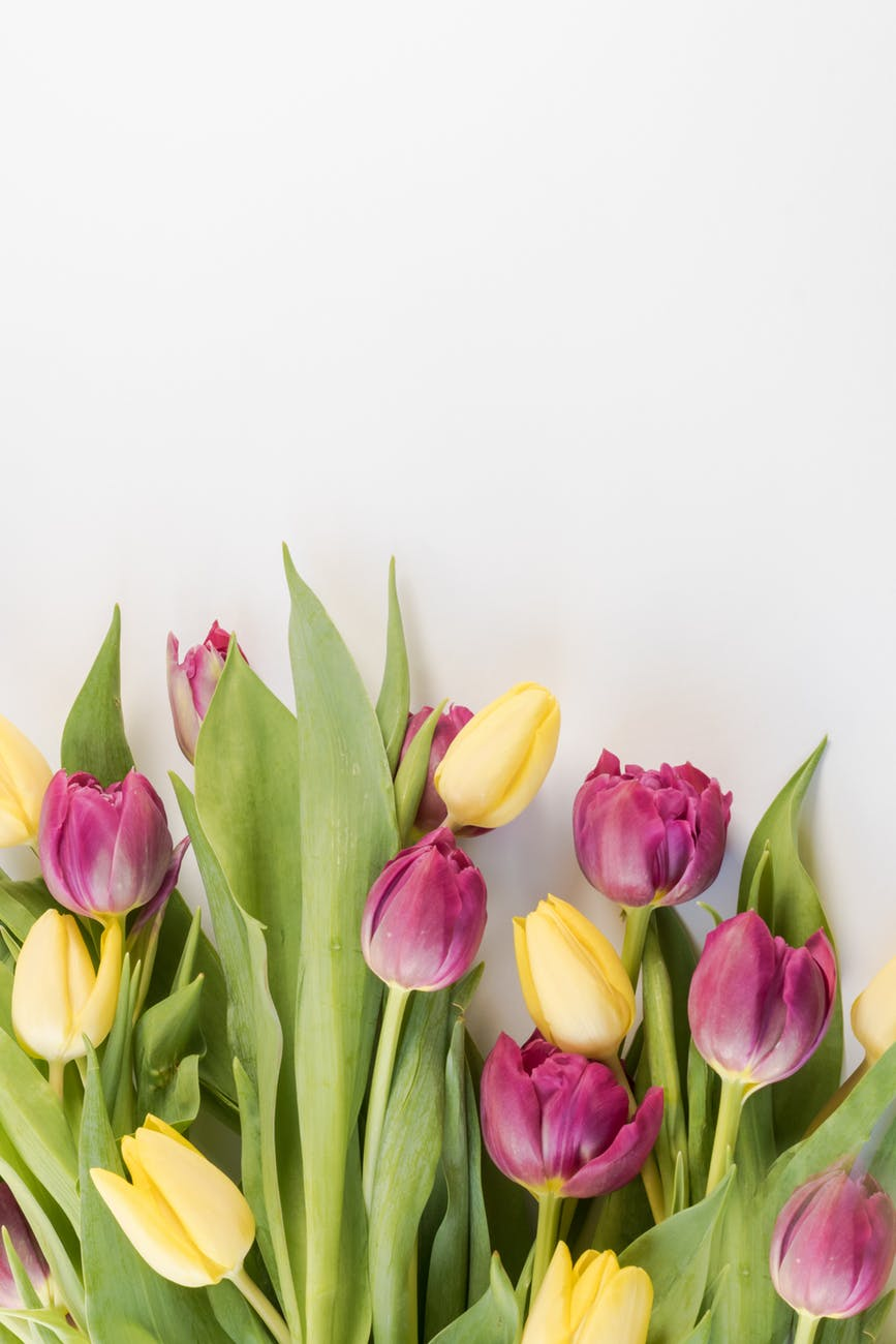selective focus photography of pink and yellow tulips flowers