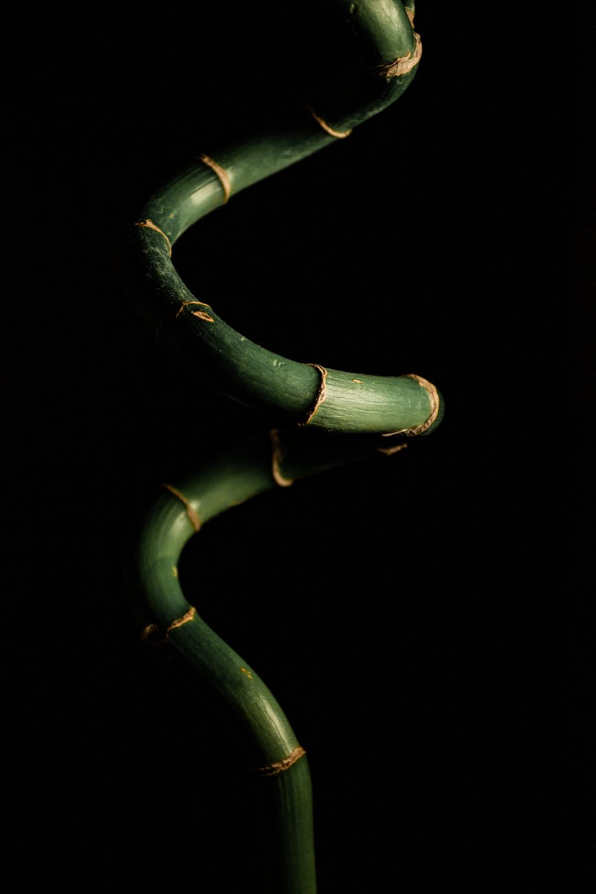 close up photography of lucky bamboo plant