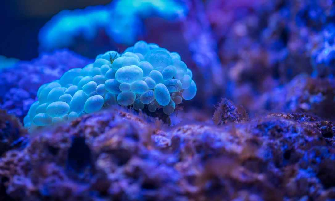 macro photography of bubble coral